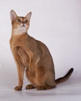cat1_small
