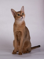 cat2_small