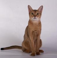cat78_small