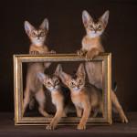 Котики дикого окраса
