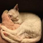 Каспер- котик белый голубоглазый котик фото2