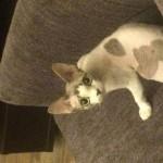 Котик Локи фото2