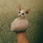 Микеланджело - девон рекс белого окраса фото 1