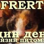 Один день из жизни питомника кошек экзотических пород Nefertee