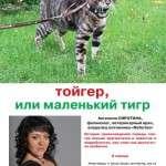 Тойгер, или маленький тигр