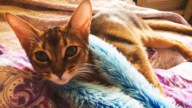 Лечебные способности кошек