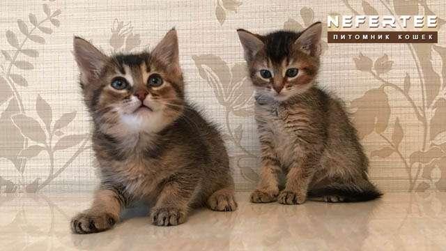 Cat Chausi F3