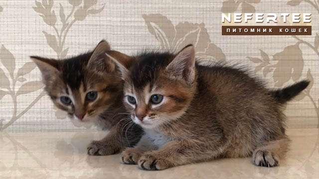 Kitty Chausi F3